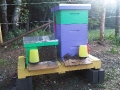 Bee Apartment complex!